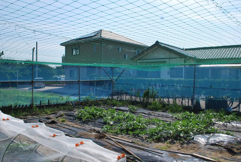 富津市トレーラーハウス 敷地 菜園スペース