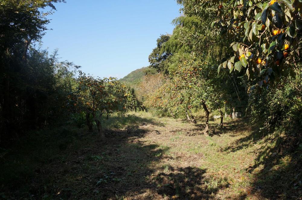 上佐久間中古 柿の木