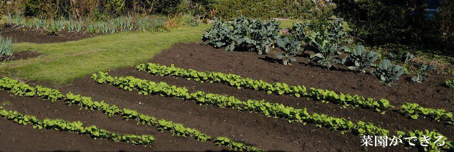 菜園スペースあり