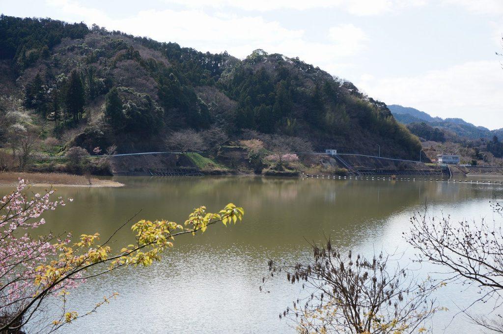 桜の名所「佐久間ダム」